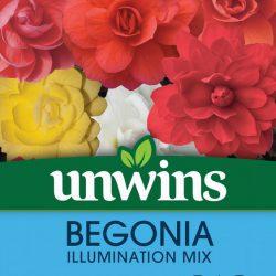 Begonia Illuminations Mix