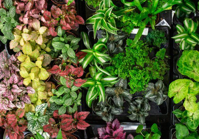 little house plants